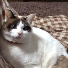 虹の橋/猫好き/猫のいる暮らし 昨年、初めてLIMIAに投稿しました。 …