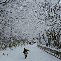 楽しい冬/雪の華/ペンギン/冬 雪の華咲く坂道を歩くペンギンのような息子…