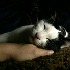保護猫/2歳/寝顔/こたつ/Nウォーム/フォロー大歓迎/... 休日は 甘えの度合いが あがります