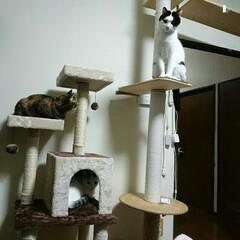 キャットウォークDIY/キャットタワー/キャットウォーク/フォロー大歓迎/ペット/ペット仲間募集/... 今日の一句  断捨離は 猫の居場所をつく…