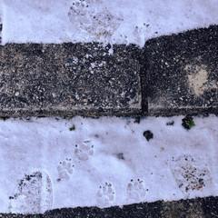 雪道/パグ/愛犬/散歩道/散歩/冬/... ぴーちゃんの足跡🐾