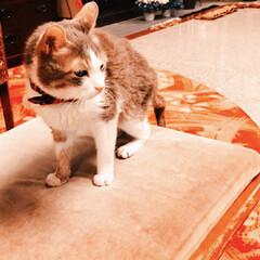 宮城県/東北/看板猫/温泉旅行/温泉/老舗旅館/... 看板猫ちゃん🐈