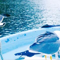 遊覧船/観光スポット/観光地/観光/東北/思い出/... 青の洞窟へ  【 浄土ヶ浜マリンハウス …
