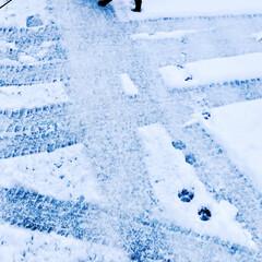 愛犬/散歩道/散歩/パグ/冬/ペット/... 足跡🐾