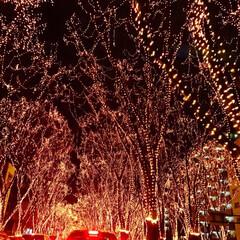 光のページェント/仙台/宮城県/東北/冬の名物/イルミネーションライト/... 仙台光のページェント😌✨