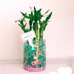 健康運UP/金運UP/ラッキーバンブー/ミリオンバンブー/観葉植物/雑貨だいすき 雑貨!…ではないよね💧 観葉植物置きまし…