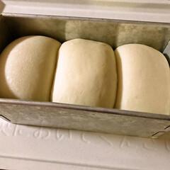 手作り/朝食/ホームベーカリー/食パン 昨日焼いた食パン(1.5斤)です。 今日…