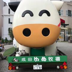 牛/成田ゆめ牧場 成田ゆめ牧場の 牛さんを発見❣️