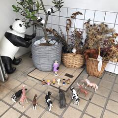 動物/美容室 娘の習い事の近くにある美容室。 あまりに…(2枚目)