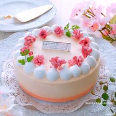 手作りスイーツ/デザート/春スイーツ/桜スイーツ/ティラミス/おうちカフェ/... 桜ティラミスケーキ♪