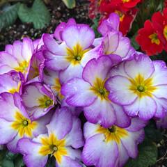 小さい春 前回に続き、小さな春【その2】と言うより…(6枚目)
