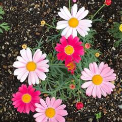 小さい春 前回に続き、小さな春【その2】と言うより…(3枚目)