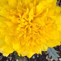 小さい春 前回に続き、小さな春【その2】と言うより…(7枚目)