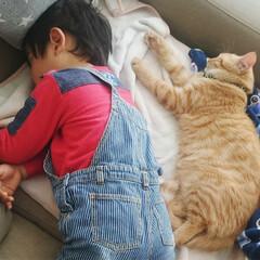 茶トラ/茶トラ男子部/保護猫/フォロー大歓迎/ペット/ペット仲間募集/... 去年のお正月🍊 この頃はまだ仲良しだった…(2枚目)