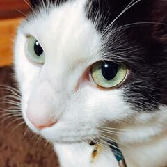 猫好き仲間/フォロー大歓迎/ペット/ペット仲間募集/猫/にゃんこ同好会 オトコマエやなぁ...🐈🐾(1枚目)