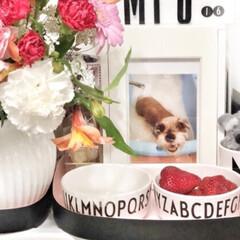 メラミンコップ メラミン 食器 コップ カップ 子供 こども キッズ DESIGN LETTERS デザインレターズ メラミンカップ | Design Letters(コップ)を使ったクチコミ「ピンクコーナーもありますw デザインレタ…」