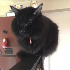 猫は高い所が好き/猫の日/LIMIAペット同好会/ペット/猫/にゃんこ同好会/... 今日は猫の日らしいです 皆さま良い夜を過…(1枚目)