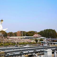 景色/風景/青空/春色/太陽の塔/公園/... 春休み最後の今日は お花見日和🌸 万博記…