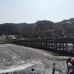 京都さんぽ/フォトジェニック/春が来た/桜満開/観光スポット/観光地/... 昨日、次女が友達と京都へ。 自分が行った…