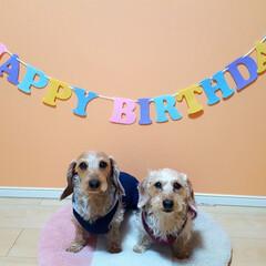 わんこは家族/幸せな生活/癒し時間/ありがとう/うちの子記念日/7歳/...  レオくん❤チョコたん お誕生日おめでと…