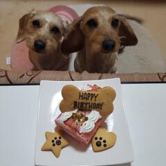幸せな毎日/お気に入り/プレゼント/記念日/イベント/happybirthday/... レオくん🐶チョコたん💕 HAPPY BI…