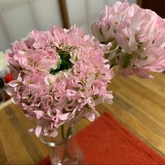 ダイニングテーブルDIY/お花のある暮らし/DIY/暮らし ラナンキュラス。 可愛い💕