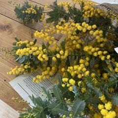 植物のある暮らし/花のある暮らし/お花のある生活/ミモザ/DIY/キッチン/... ミモザの季節ですねー。