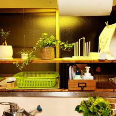 グリーンのある暮らし/ブロック/ブロック棚/セリア/100均/DIY/... 棚に合う小箱が欲しくてセリアで材料を揃え…