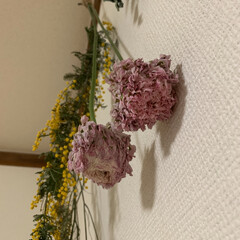 ドライフラワー/ラナンキュラス/ミモザ/お花のある生活/花のある暮らし/雑貨/... 先日upしたラナンキュラス・ハーマイオニ…