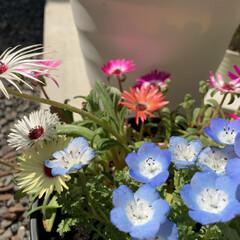 ガーデニング/お花のある暮らし 庭いじりと仕事でYouTubeやっておう…