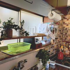 古い家/賃貸インテリア/築40年越え/グリーンのある暮らし/ブロック棚/リミアの冬暮らし/... The 昭和のキッチンですが、ちまちまと…