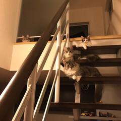 LIMIAペット同好会/にゃんこ同好会 子猫たちもすっかり大きくなりました。