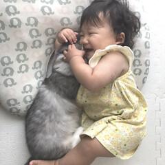 LIMIAペット同好会/にゃんこ同好会/至福のひととき 子供と猫のショットは 忙しい毎日に #至…(1枚目)