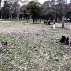 台風の影響/見返り美人/元気/下見/公園/花見/... 花見の下見に娘と公園へ 台風の影響で沢山…
