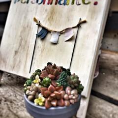 リメイク鉢/アンティーク/シャビーシック/ジャンク/多肉植物/洗濯どうしてる?/... 2号のリメイク鉢にセダム寄せ、物干しピッ…