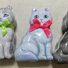 猫/フィナンシェ 猫の缶❗️可愛くって、衝動買い。 中には…