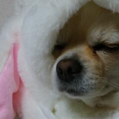 LIMIAペット同好会/フォロー大歓迎/ペット/ペット仲間募集/犬/わんこ同好会/... TWICEがとても好きな娘。ナヨンがかぶ…(2枚目)