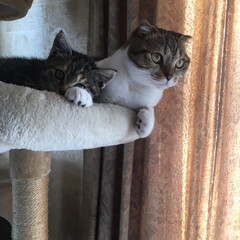 ペット/ペット仲間募集/猫/にゃんこ同好会 *こころ安らぐ猫との生活 安らぐ 和む …(1枚目)