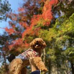 紅葉/紅葉特集 近くの公園に紅葉を見に行きました。 ソル…