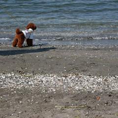 トイプードルの女の子/トイプードル部/トイプードル/LIMIAペット同好会/LIMIAおでかけ部/ペット/... 近くの海までお散歩しながら行ってきました…
