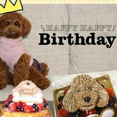 トイプードルレッド/トイプードルの女の子/トイプードル/LIMIAペット同好会/ペット/ペット仲間募集/... ソルト1才のお誕生日 家族みんなでお祝い…
