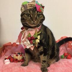 猫の日/うちの子ベストショット/LIMIAペット同好会/フォロー大歓迎/ペット仲間募集/猫/... 猫の日 おめでとう🎊💕