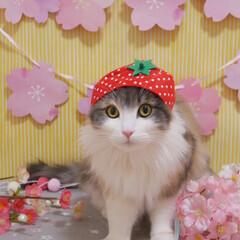 LIMIAペット同好会/ペット/ペット仲間募集/犬/わんこ同好会/猫/... 春仕様の写真を撮影してみました🌸🍓🌸🍓