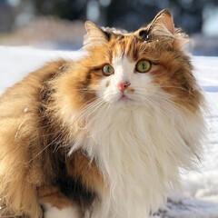 猫/うちの子ベストショット 2019.2.11の雪遊び💕 優々ちゃん…