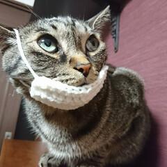 ニャスク/猫用マスク/毛糸/かぎ針編み/まめ/ハンドメイド/... 『猫用マスク』編んでみました🌸  猫もマ…(3枚目)