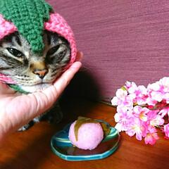 桜餅/桜餅帽子/ペット用帽子/かぎ針編み/私の手作り/ペット/... おひとつ いかが❓