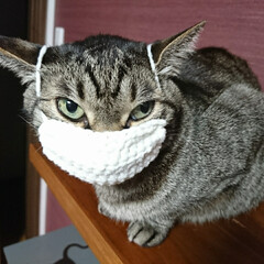 ニャスク/猫用マスク/毛糸/かぎ針編み/まめ/ハンドメイド/... 『猫用マスク』編んでみました🌸  猫もマ…(2枚目)