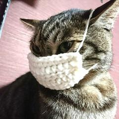 ニャスク/猫用マスク/毛糸/かぎ針編み/まめ/ハンドメイド/... 『猫用マスク』編んでみました🌸  猫もマ…(1枚目)