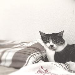 保護猫/びっちゃん/びびこ/はじめてフォト投稿/ペット/猫/... まったりねぇーさん。 かわいいかわいい我…