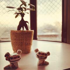 出窓/シーサー/ガジュマル/観葉植物 出窓の植物にあたらしく仲間入りしたガジュ…